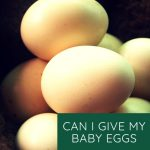 Can I give My Baby Egg